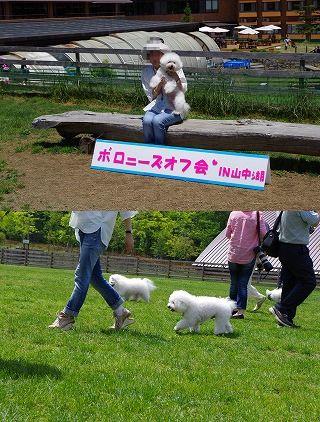 10 ぴこ1.jpg